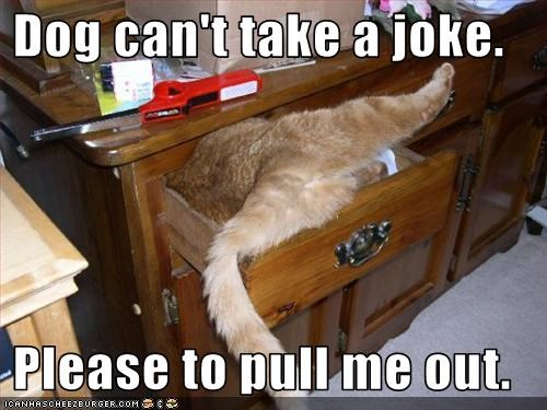 dogs halp prank stuck - 3216824064