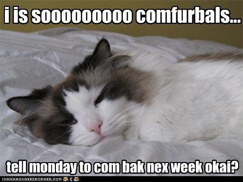 bed,comfortable,do not want,monday,nap