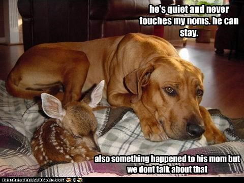 cuddle,deer,labrador,nom,quiet