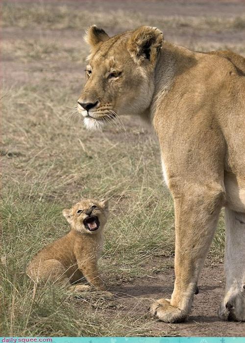 cub lion lioness - 3219298816