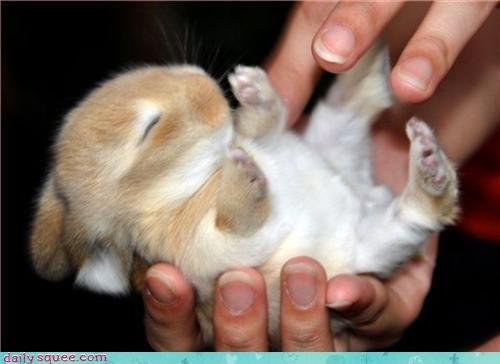 baby,bunny,ear
