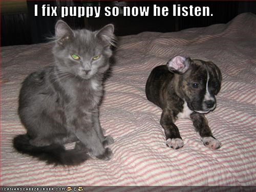helping,kitten,loldogs,mean,puppy