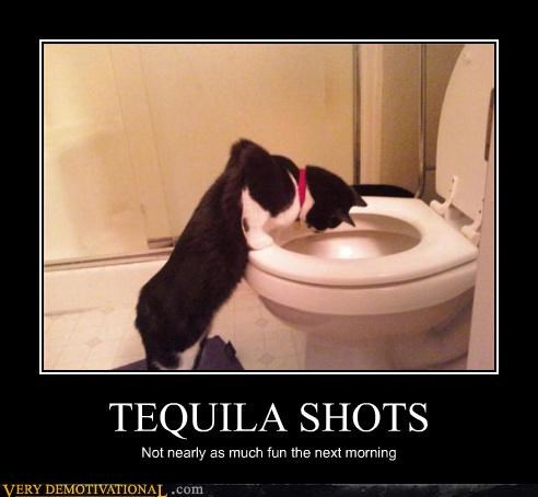 alcohol cat demotivational drinking hilarious hungover Sad tequila - 3219421184