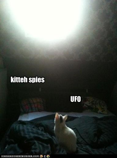 kitteh spies UFO