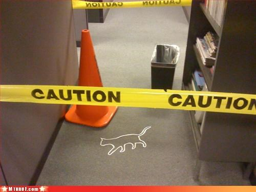 art boredom class clown creativity in the workplace crime scene cubicle boredom cubicle prank dead cat Eight Lives feline felinicide gruesome hazard tape homicide nine lives prank pwned wiseass
