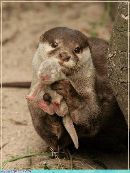 baby,mom,otter