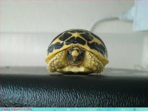 geeky shell turtle - 3219979776