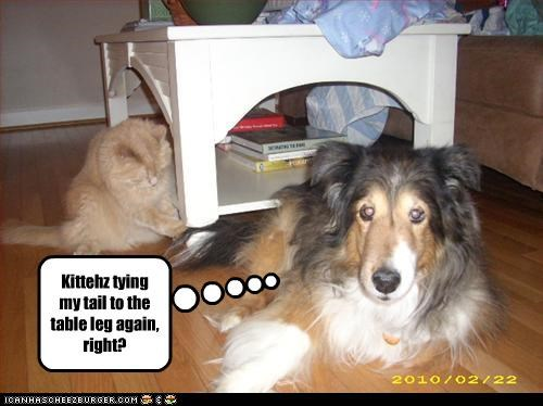 collie joke lolcats pranks table - 3220270592
