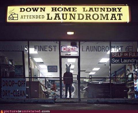 bunny creepy laundry wtf - 3220407296