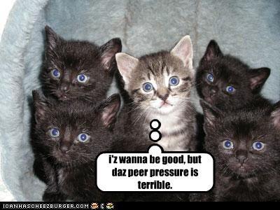 bad cat basement cat kitten peer - 3220577280