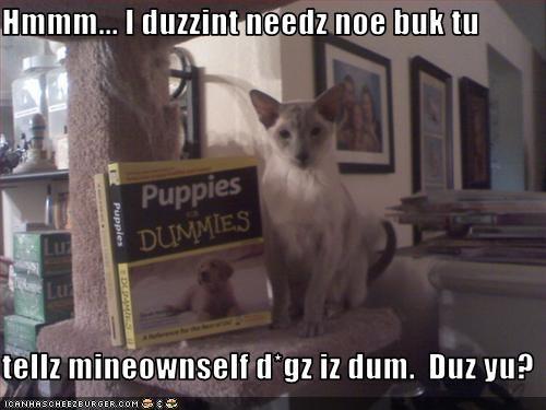 Cheezburger Image 3221093120