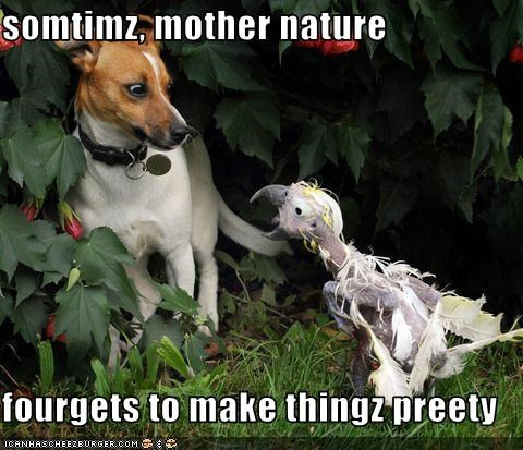 Cheezburger Image 3221104640