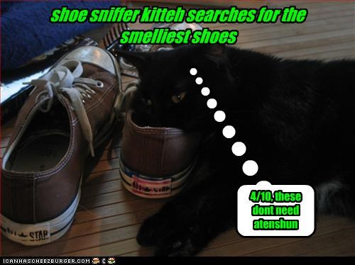 shoe sniffer kitteh searches for the smelliest shoes 4/10, these dont need atenshun