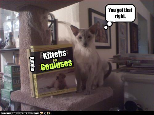 Cheezburger Image 3222202368