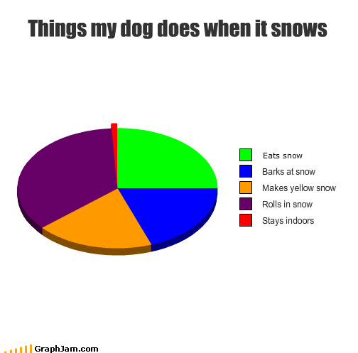 bark dogs eat indoors pee Pie Chart roll snow stay yellow