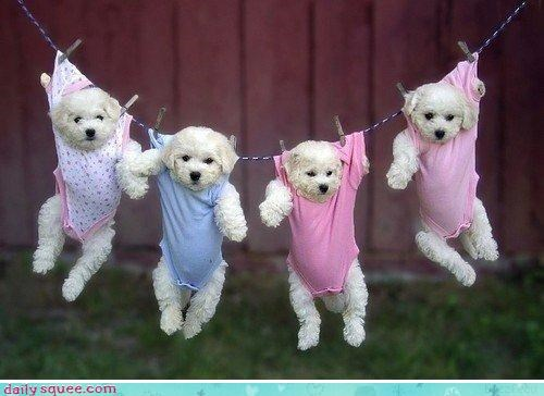 costume litter puppy - 3223272192