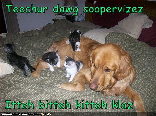 Cheezburger Image 3224018176