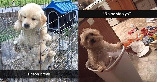 14 perros en snapchat
