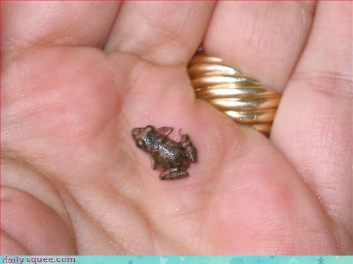 baby frog so tiny