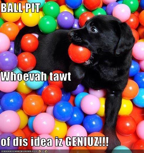 ball fun labrador puppy - 3226022656
