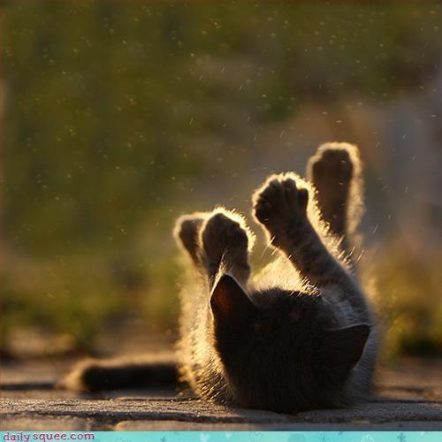 cat invisible kitten - 3226488832