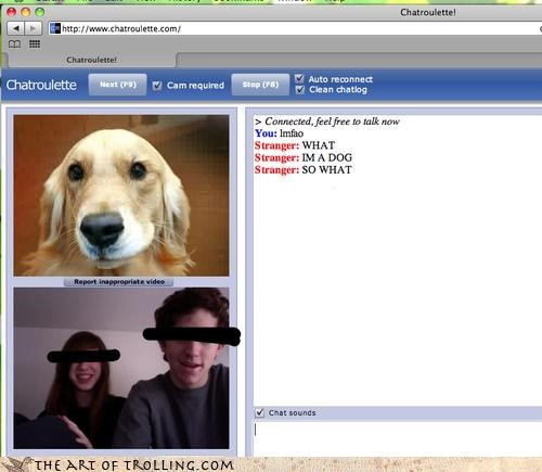Chat Roulette dogs what - 3226839040