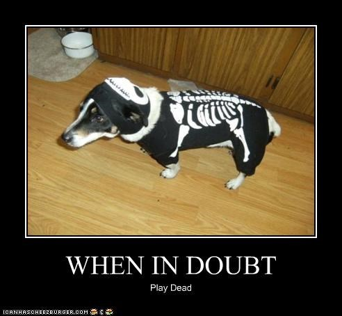 costume dachshund play dead skeleton