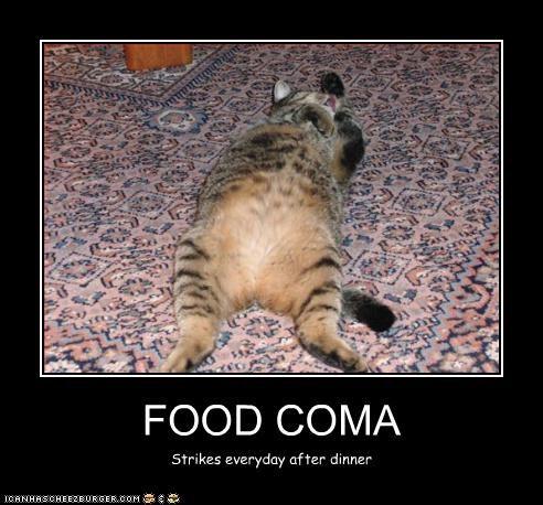 Food Coma I Can Has Cheezburger