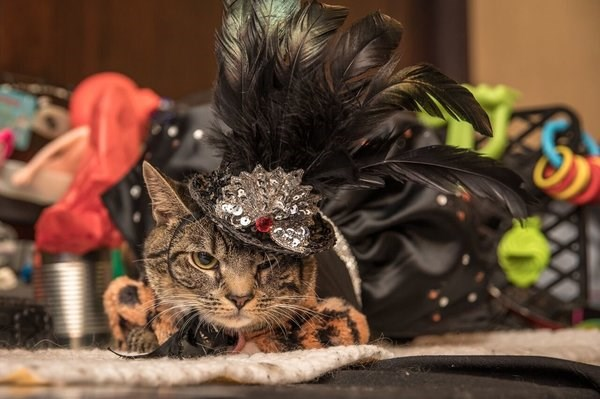 photos From the 2017 annual cat fashion show