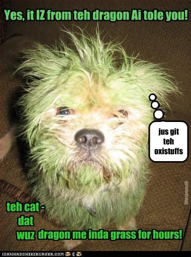 grass stains Yes, it IZ from teh dragon Ai tole you! teh cat - dat wuz dragon me inda grass for hours! OHgrammyIO jus git teh oxistuffs