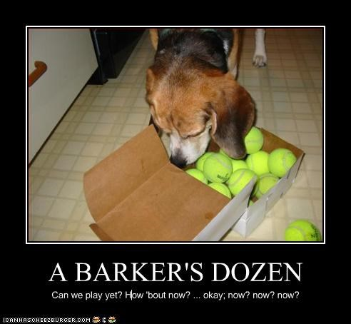 A BARKER'S DOZEN Can we play yet? How 'bout now? ... okay; now? now? now?