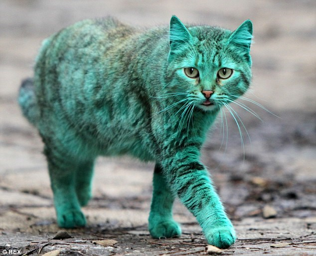 green cat in bulgaria