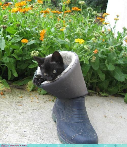 cat,kitten,nerd jokes
