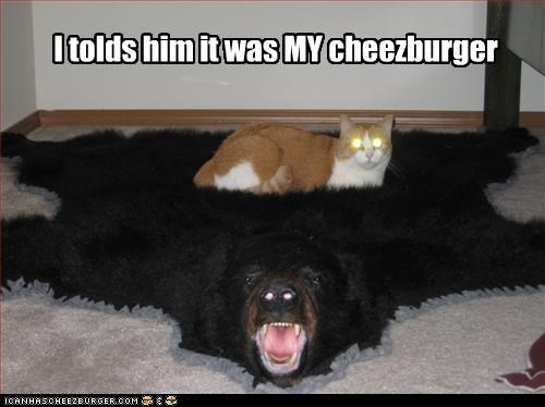 Cheezburger Image 3229272576
