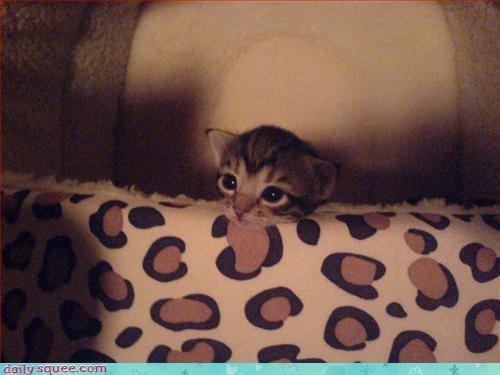 kitten week old kittens - 3229285376