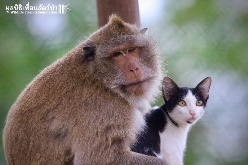 monkeys kitten cute thailand Cats - 3229445