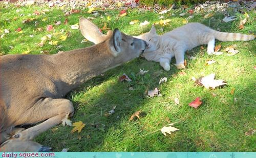 cat,deer,nap