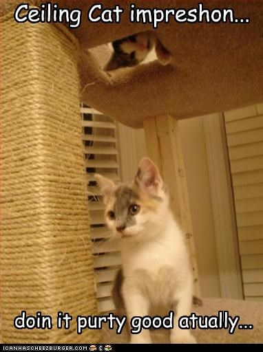 Ceiling Cat impreshon... doin it purty good atually...