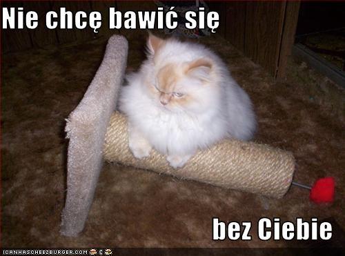 Cheezburger Image 3230476544
