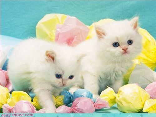kitten props sets - 3230638848