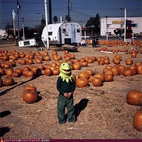 children,kermit,pumpkins,vintage,wtf