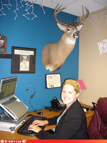 awesome awesome co-workers not dead animal Death decay decomposing decor decoration gross hunter osha redneck sculpture slaughter stuffed deer head tacky taxidermy Terrifying trophy