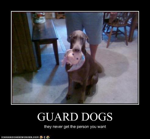 GUARD DOGS they never get the person you want