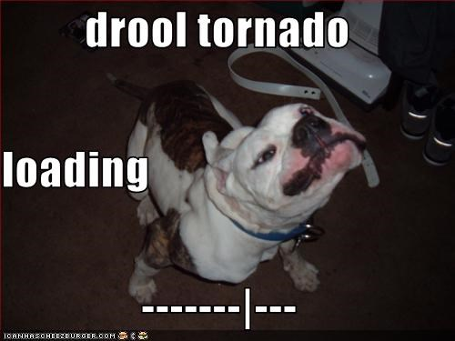 bulldog,drool,loading,shake
