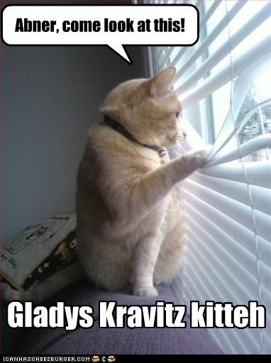 Gladys Kravitz kitteh Abner, come look at this!