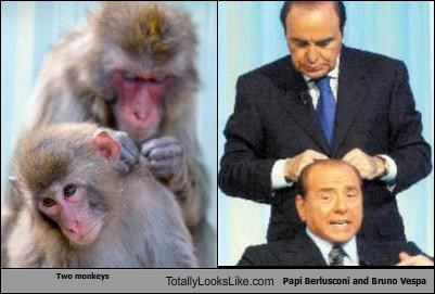 bruno vespa grooming Hall of Fame monkey politician silvio berlusconi