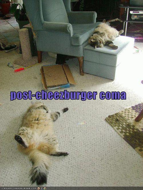 Cheezburger Image 3234846976