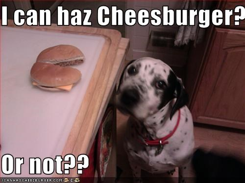 Cheezburger Image 3235656448