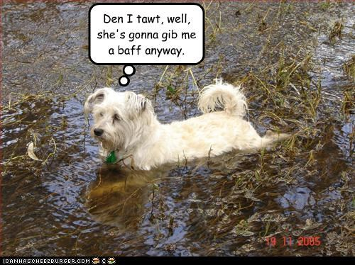 bath dirty mud west highland white terrier - 3235718912