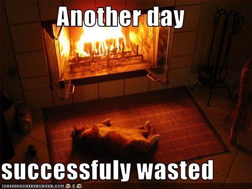 lazy nap - 3235808512